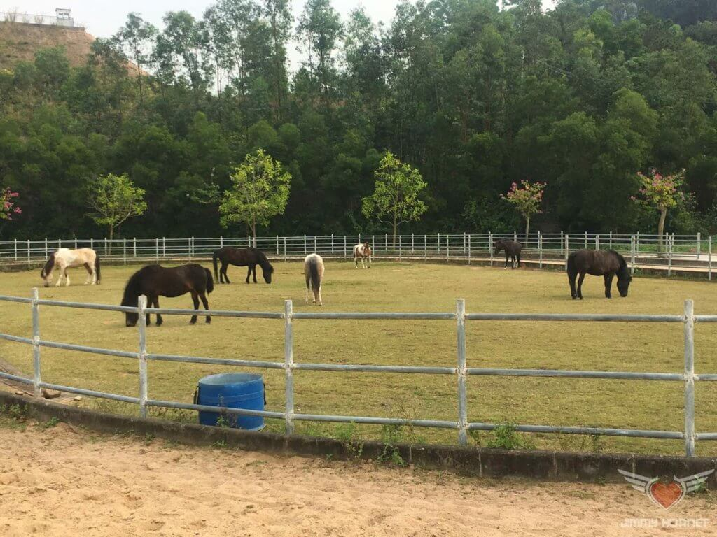 Pony enclosure at Flow Organic Farm and Animal Sanctuary
