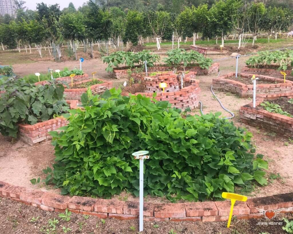 Herb garden at Flow Organic Farm and Animal Sanctuary
